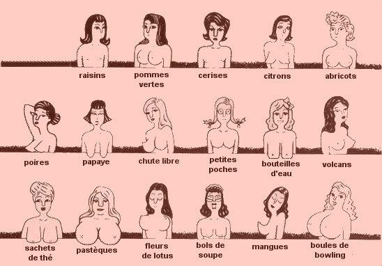 forme-de-seins