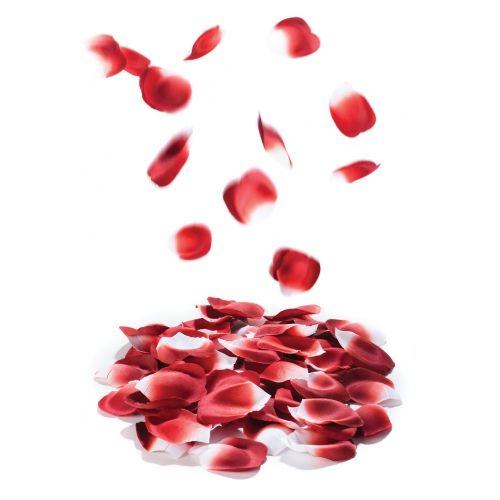 Pétales de Roses Petals Explosion