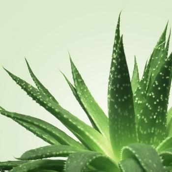 Gel de Massage Nuru NÜ Aloe Vera 150 ml
