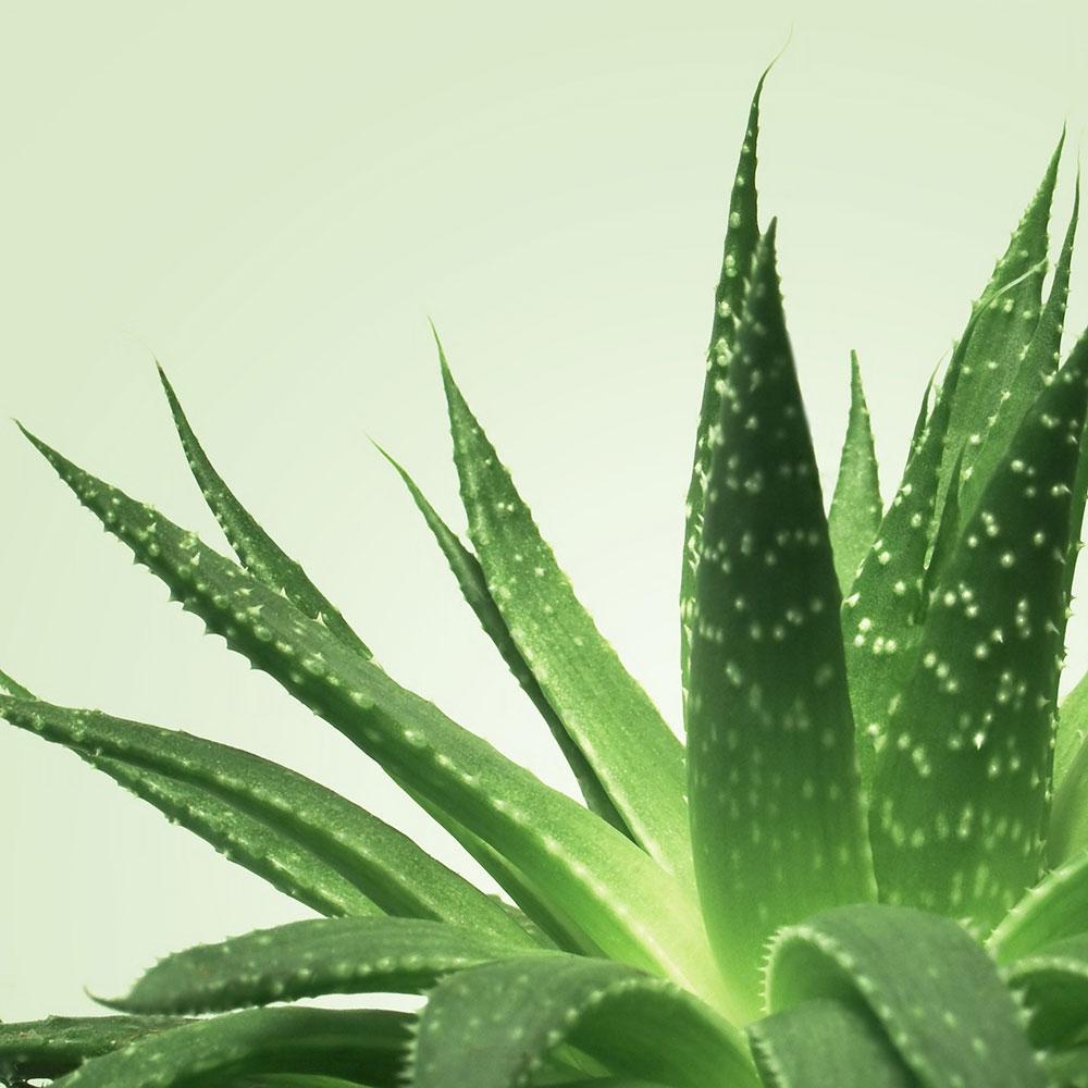 Gel de Massage Nuru NÜ Aloe Vera 250 ml