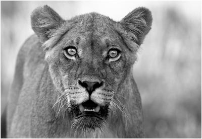 peur-plus-beaux-portraits-animaux-sauvages_354897