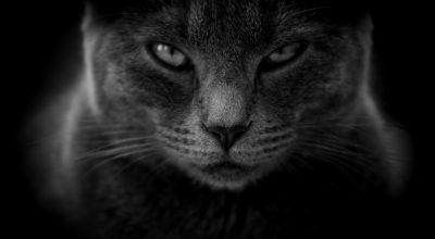 tête-de-chat