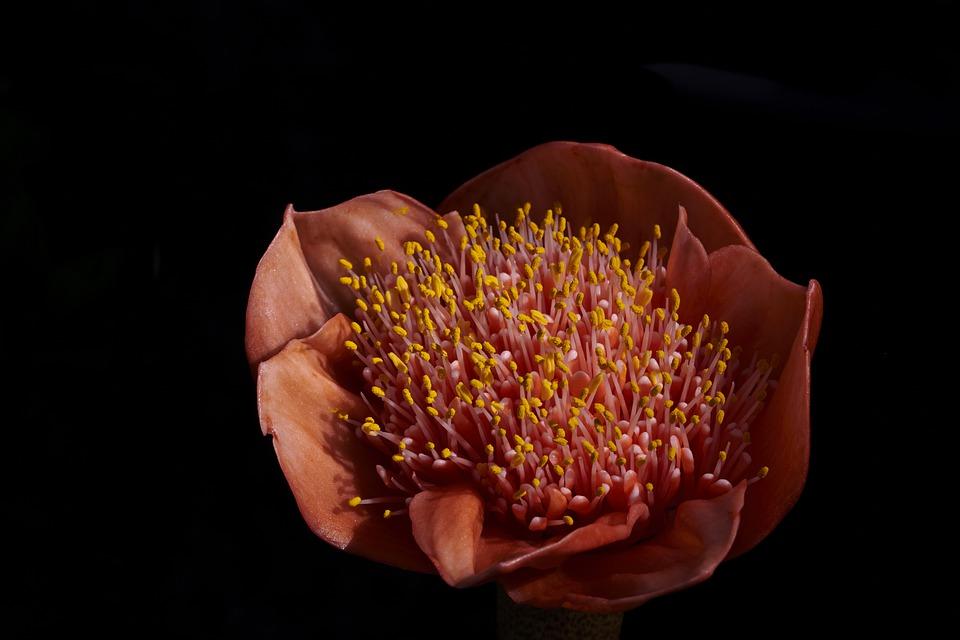 fleurs-pollen-infection