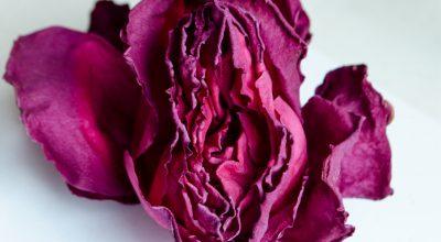 fleur-vagin-rose-espaceplaisir