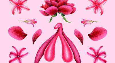 clitoris-représentation